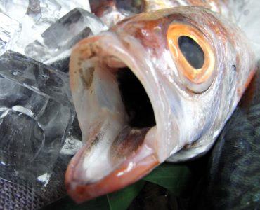 超高級魚のど黒刺し450円!!★